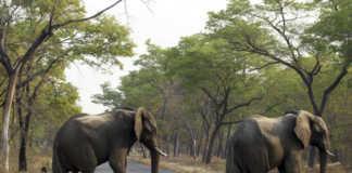 elefante, Zimbabwe, meio ambiente, extinção